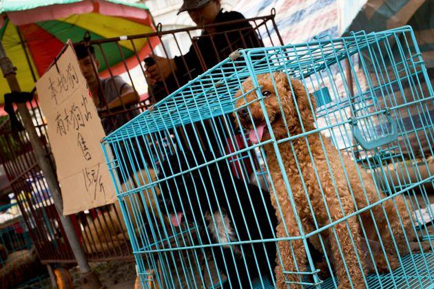 Σκύλοι προς πώληση στο...