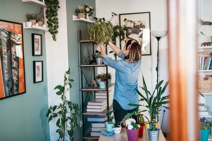 Where to buy affordable plants online, so you can bring the outdoors in.