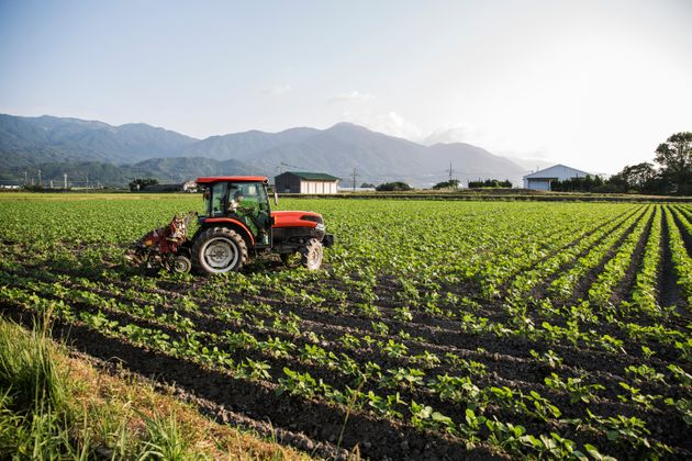 Japanese farmer driving red tractor through a field of soy bean