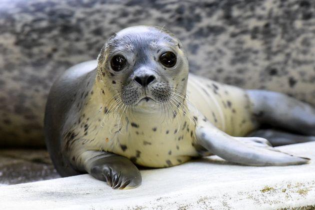 Γερμανία: Ζωολογικός κήπος σχεδιάζει να μετατρέψει τα ζώα του σε τροφή λόγω