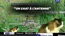 Le chat de ce présentateur météo américain est devenu une véritable