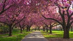 Birdsong And Blossoms: We've Never Appreciated Nature More Than We Do