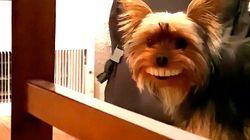 Este perro te sacará una buena