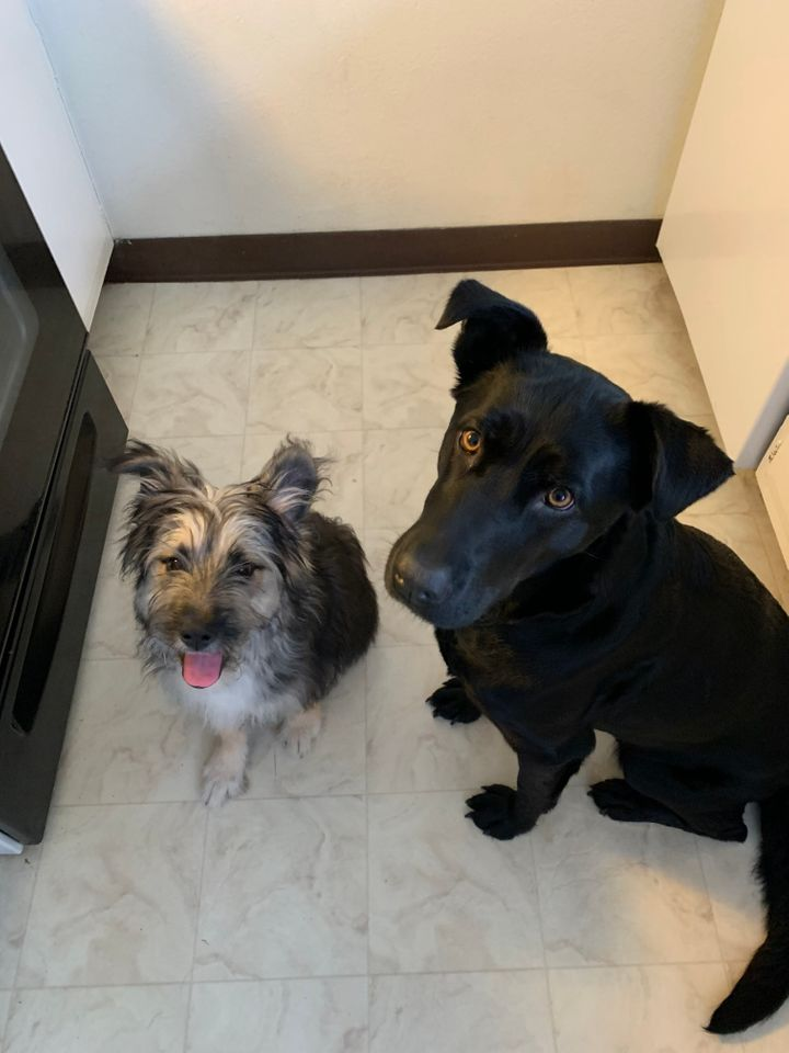 Scruffy (left) and Luna waiting for treats.