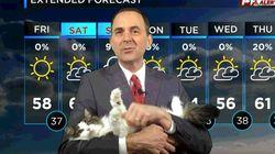 自宅から放送した天気予報に、お天気キャスターの飼い猫が登場。可愛すぎてレギュラーに