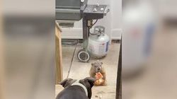 La marmotta va matta per la pizza. E i cani dietro al vetro restano a