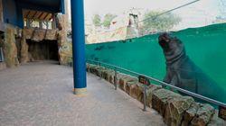 Le soutien du gouvernement aux zoos et aux cirques irrite les défenseurs des