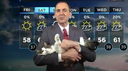 Cat Interrupts Meteorologist Working From Home And Wins A New