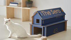 テレビの箱が「猫の家」に...?家具に早変わりするサムスンの「エコ・パッキング」
