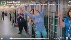 """""""空っぽ""""になった犬の保護施設で職員が大喜び。新型コロナ禍に里親になる人が急増中(動画)"""