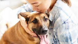 Un animal domestique peut être bénéfique pour briser l'isolement en