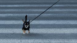 Con gafas de perro: las enseñanzas de los animales para vivir el