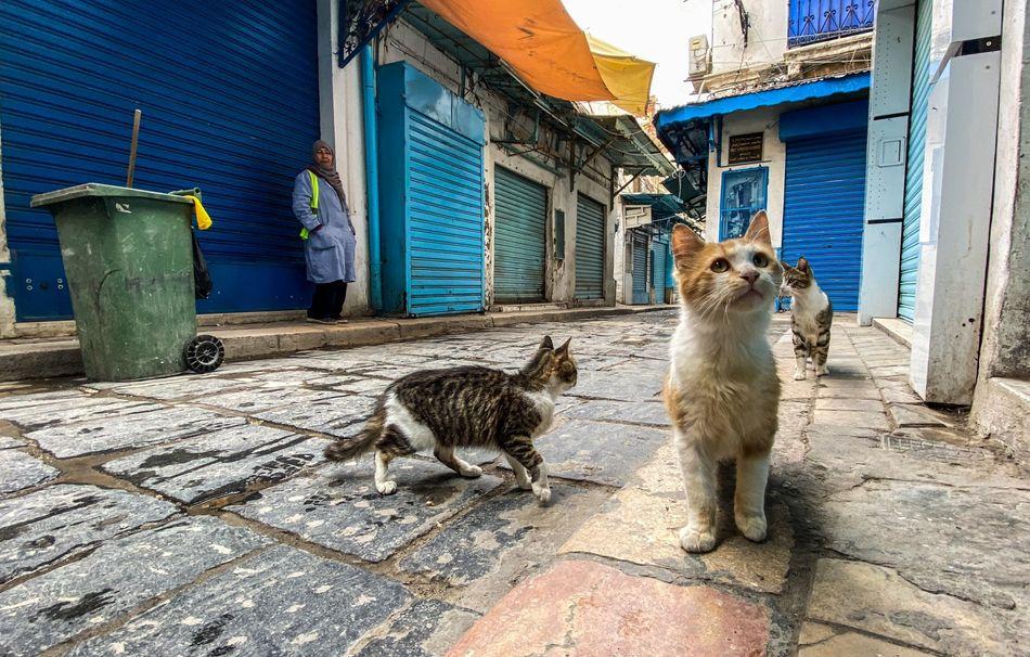 Cats on a nearly empty street in the Medina neighborhood of Tunis, Tunisia.