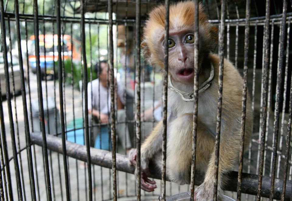 A monkey is kept in a cage for sale at an animal market in Jakarta, Indonesia, in May