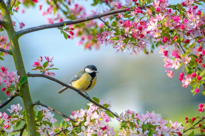 Μπορούμε πραγματικά να ακούσουμε «τη φωνή της φύσης» - το τραγούδι των πουλιών, τον ήχο της βροχής, τον άνεμο στα δέντρα