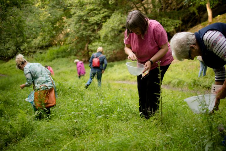 A Beginner's Guide To Foraging | HuffPost UK Life