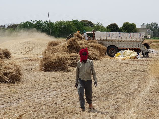 The farmers are expecting a manifold increase in terms of farm expenses due to high labour cost and a...
