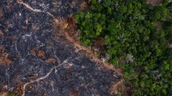 'The Real Virus Is Bolsonaro': Pandemic Helps Fuel Deforestation In