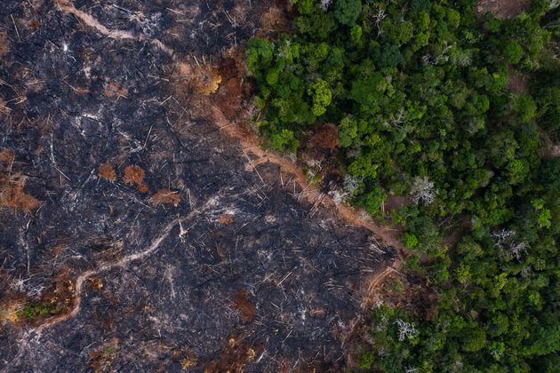 A burned area of the Amazon rainforest in Prainha in the Brazilian state of Para on Nov. 23, 2019. After...