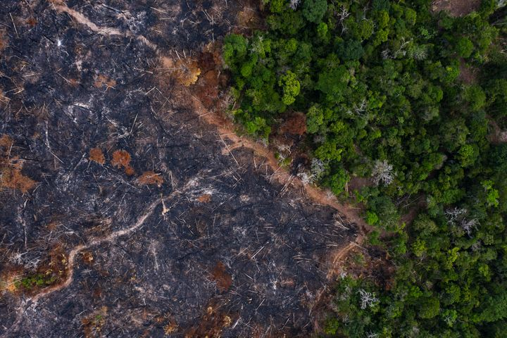 A burned area of the Amazon rainforest in Prainha in the Brazilian state of Para on Nov. 23, 2019. After a rash of fires link