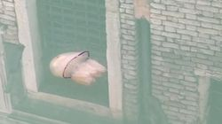 Captan a una medusa nadando en un canal de Venecia durante el