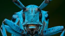 Earth's Insect Population Shrinks 27% In Last 30