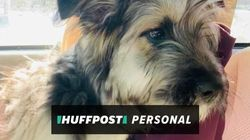 I Fostered A Puppy During Covid-19. It Helped In An Unexpected