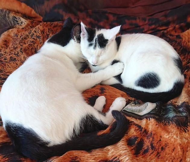 Sammy and Luna