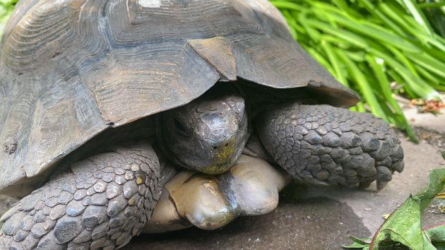 Sonic the tortoise