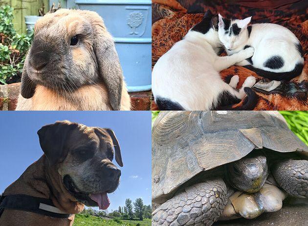 Pets helping us through lockdown