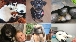 Through Grief, Loneliness And Anxiety, Our Pets Are Helping Us