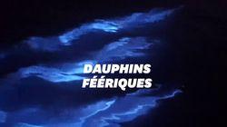 Le spectacle de ces dauphins dans des vagues bioluminescentes est