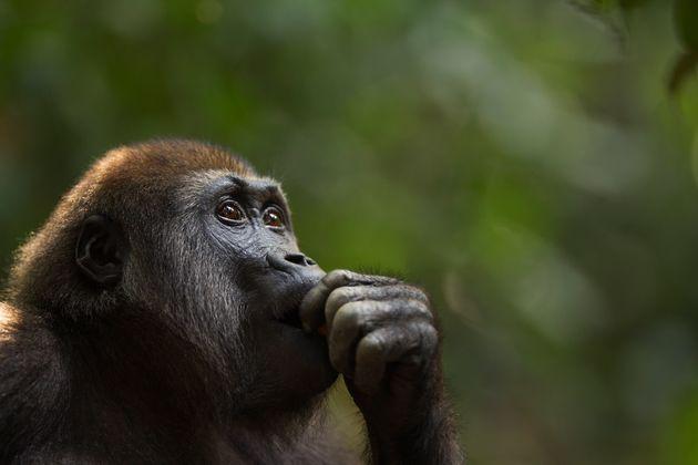 Covid-19 en los primates: ¿debemos