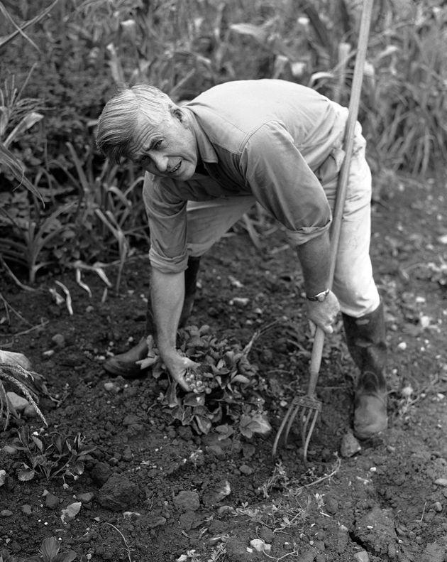 O Χένρι Γουάλας, πρώην αγρότης...