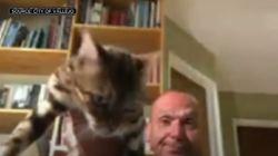 화상 회의 중 고양이 집어던진 미국 공무원이