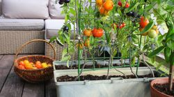 Where To Buy Fruit And Vegetable Seeds Online To Grow Your Own