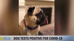 미국에서도 반려견의 코로나19 감염 사례가