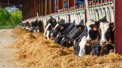 Les transformateurs laitiers seront affectés par l'entrée en vigueur anticipée de