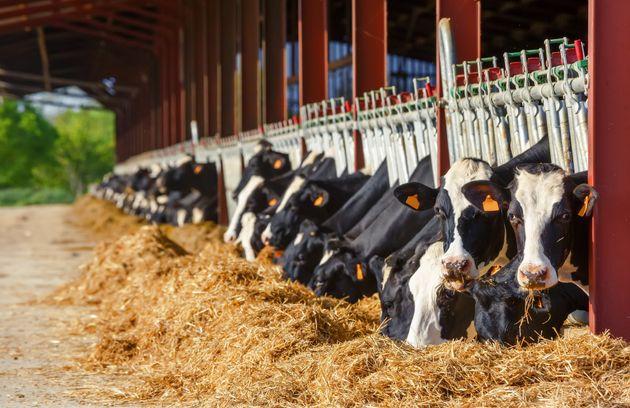 ACEUM: les transformateurs laitiers seront affectés par l'entrée en vigueur anticipée de
