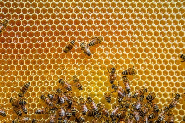 Grâce aux conditions météos, les abeilles ont pu produire plus de