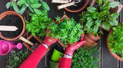 Τα βήματα για να δημιουργήσουμε κήπο με βότανα μέσα στο