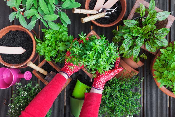 Πώς θα δημιουργήσουμε κήπο με βότανα μέσα στο σπίτι και πώς σε εξωτερικό χώρο.