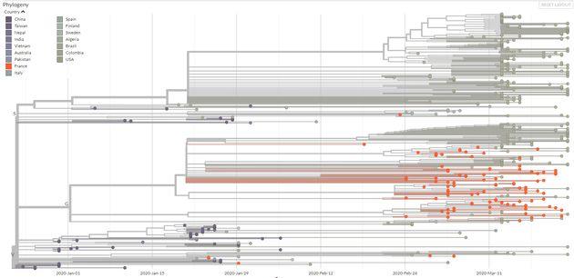 L'arbre phylogénétique du coronavirus Sars-Cov2 (les points orange sont ceux séquencés sur des cas