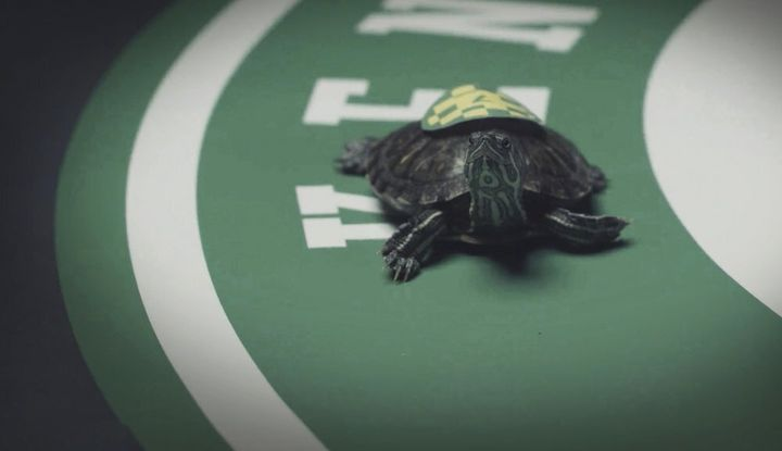 The Kentucky Derby has been postponed so sports fans in the state will be betting on turtle races this weekend.