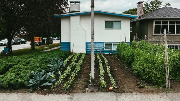 We trade homeowners vegetables for the use of their front and back