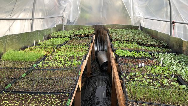 A greenhouse provides ideal conditions for certain young vegetablesas they mature. A covered porch...