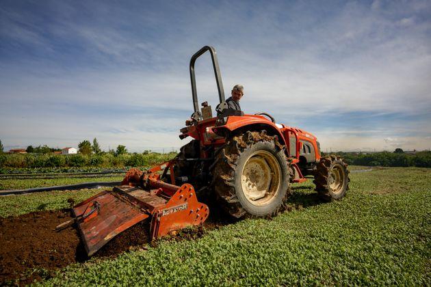 Un agricultor trabaja con su tractor sus cultivos en Madrid, durante la