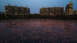 Thousands Of Flamingos Take Over India's Largest City Amid Coronavirus