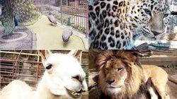 休園中の動物園、おうちで楽しんで。大牟田市動物園はライブ中継も。