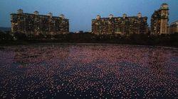 今年は約15万羽ものフラミンゴがインド最大の都市ムンバイに...なぜ?